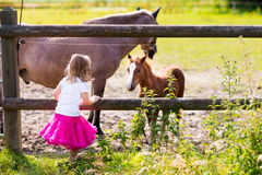 Little girl feeding baby horse on ranch Royalty Free Stock Image