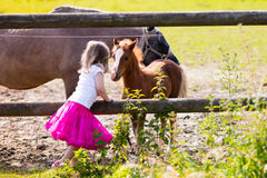 Little girl feeding baby horse on ranch. Little girl playing with mother and baby horses on sunny summer day in the country. Child feeding horse and foal pet stock photography