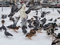 Little girl feeding birds in winter street.  royalty free stock photography