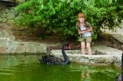 Little girl feeding a black swan Stock Photo