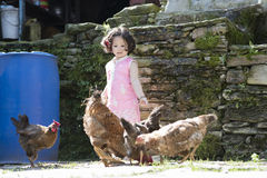Little girl feeding chicken. Little girl feeding chicken outdoor on a sunny day Stock Photo