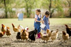 Little girl feeding chickens Stock Photography