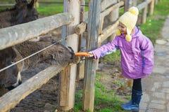 Little girl feeding donkey Royalty Free Stock Images