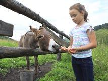 Little girl feeding donkey. Carrot Royalty Free Stock Photo