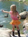 Little girl feeding ducks. Bread royalty free stock photos
