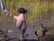 Little girl feeding ducks. Child in pink jacket feeding ducks stock photography