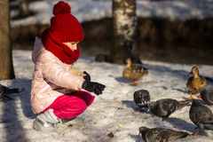 Little girl feeding ducks. In the spring stock photos