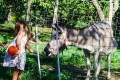 Little girl feeding farm animals Royalty Free Stock Image
