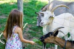 Little girl feeding farm animals Stock Photos