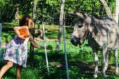 Little girl feeding farm animals Stock Image