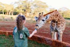 Cute little girl feeding giraffes in Africa. Little girl feeding giraffes in Africa Royalty Free Stock Image