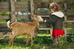 Little girl feeding goat in the garden Stock Image