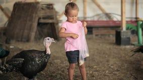 Little girl feeding a hen in hen farm and scared turkey stock video