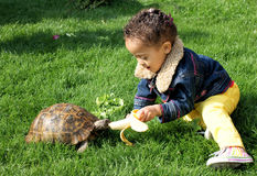 Little girl feeding her tortoise. Stock Image