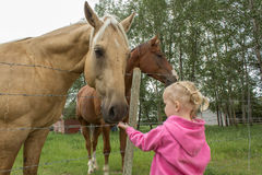 Little girl feeding a horse. By a wire fence Stock Images