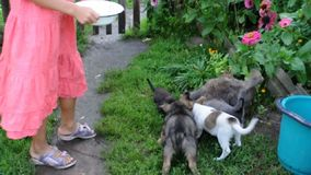 Little girl feeding kittens and puppies stock video footage