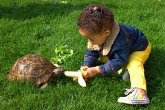 Little girl feeding pet tortoise on the lawn Royalty Free Stock Photos