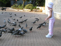 Little girl feeding pigeons. Girl feeding the pigeons in a public park Stock Photography
