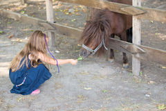 Little girl feeding a pony Stock Images