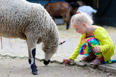 Little girl feeding sheep in the farm Stock Photos