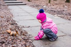 Little girl feeding squirrel with nuts in forest. Stock Photography