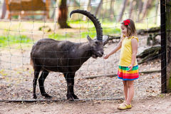 Little girl feeding wild goat at the zoo Stock Images