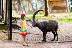 Little girl feeding wild goat at the zoo. Cute little girl in colorful dress watching and feeding wild alpine goat with large horns at the zoo on sunny summer Royalty Free Stock Images
