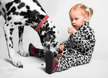 Little girl feeds from a bowl Dalmatian dog Stock Photography