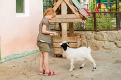 Little girl feeds a goat Royalty Free Stock Photo