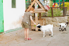 Little girl feeds a goat Stock Images
