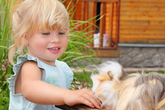 Little girl feeds Guinea pig in courtyard Royalty Free Stock Photo