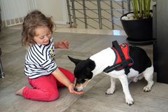 Little girl feeds her little dog from her hand stock images