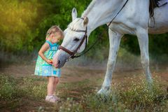 The little girl feeds a horse. The little girl feeds a white horse Stock Photo