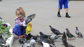 Little girl feeds pigeons in the park. Little girl feeds the pigeons in the park stock video footage