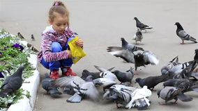 Little girl feeds pigeons in the park. Little girl feeds the pigeons in the park stock footage