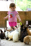 The little girl feeds rabbits Royalty Free Stock Images