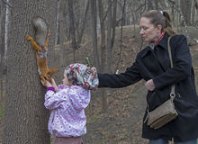 Little girl feeds a squirrel. Royalty Free Stock Photo