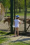 A little girl feeds a young deer in a zoo in the summer during t. He moulting period against a background of green grass. Scary ugly fur with bald patches stock photos