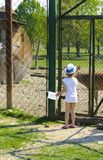 A little girl feeds a young deer in a zoo in the summer during t. He moulting period against a background of green grass. Scary ugly fur with bald patches royalty free stock photography