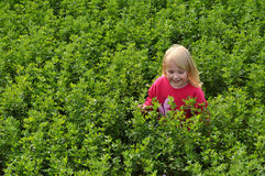 Little girl in field Royalty Free Stock Photos
