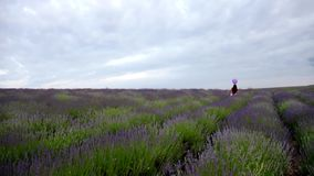 Little Girl in a Field of Lavender stock video footage