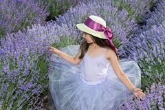 Little girl in a field of lavender. Little girl with a hat in a field of lavender royalty free stock photos
