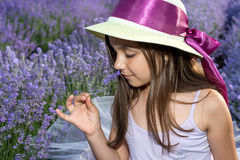 Little girl in a field of lavender. Little girl with a hat in a field of lavender royalty free stock image