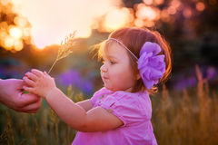 Little girl in a field stock photography