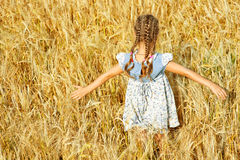 Little girl on field with ripe Royalty Free Stock Photo