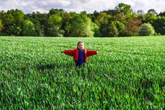Little girl in a field of rye Royalty Free Stock Photos