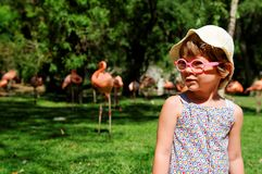 Little girl with flamingos royalty free stock images