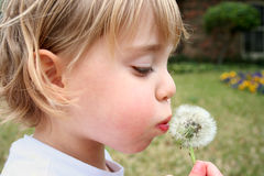 Little Girl and Flower Stock Photography