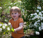 Little girl among flowers Stock Photos