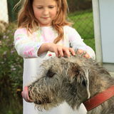 Little girl fondling a dog Stock Images
